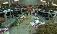Governo dos Açores anuncia cancelamento de eventos relacionados com a agricultura