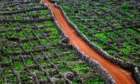 Governo avança com criação do Instituto da Vinha e do Vinho dos Açores