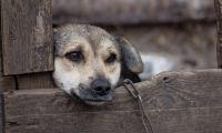 Açores com plataforma 'online' para denúncias de maus tratos a animais