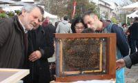 Start-up do mês: BeeSOStainable dá vida às abelhas e promove inclusão de pessoas com deficiência