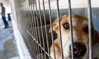 PAN/Açores apresenta proposta para acabar com o abate de animais de companhia