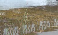 Maputo: Derrame de combustível no rio Umbeluzi deve ser visto com seriedade, alerta ambientalista