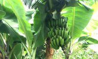 Estados Unidos apoiam agricultura e transporte rural em Moçambique
