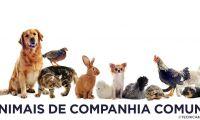 Municípios apoiam antecipação do fim do abate a animais de companhia nos Açores