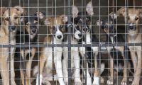 PAN propõe a criação de Provedor Regional do Animal nos Açores
