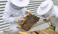 Governo dos Açores vai autorizar a utilização de gasóleo agrícola na apicultura